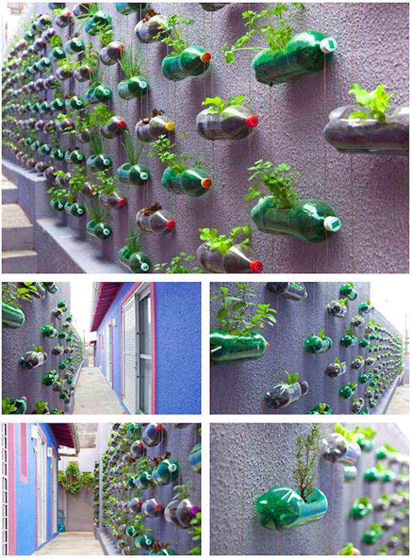 Hanging bottles to grow plants