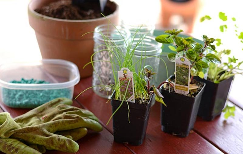 How to Start An Herb Garden on A Window Sill