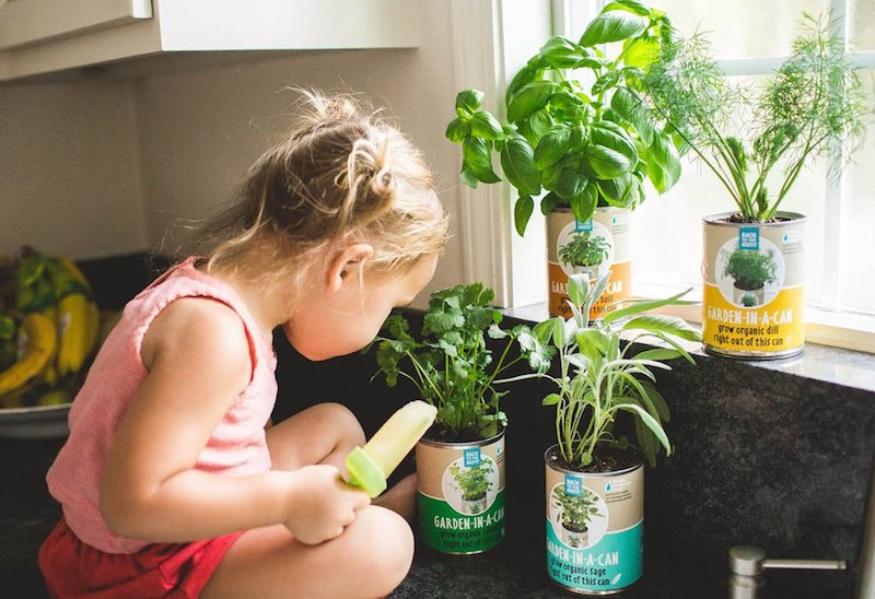 How to Make Herb-Garden on Your Window Sill — Bonus: