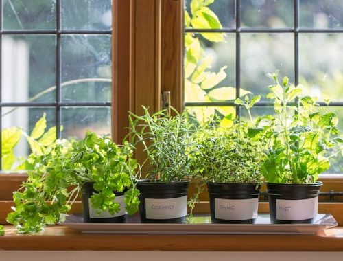 DIY: How to Make Herb-Garden on Your Window Sill